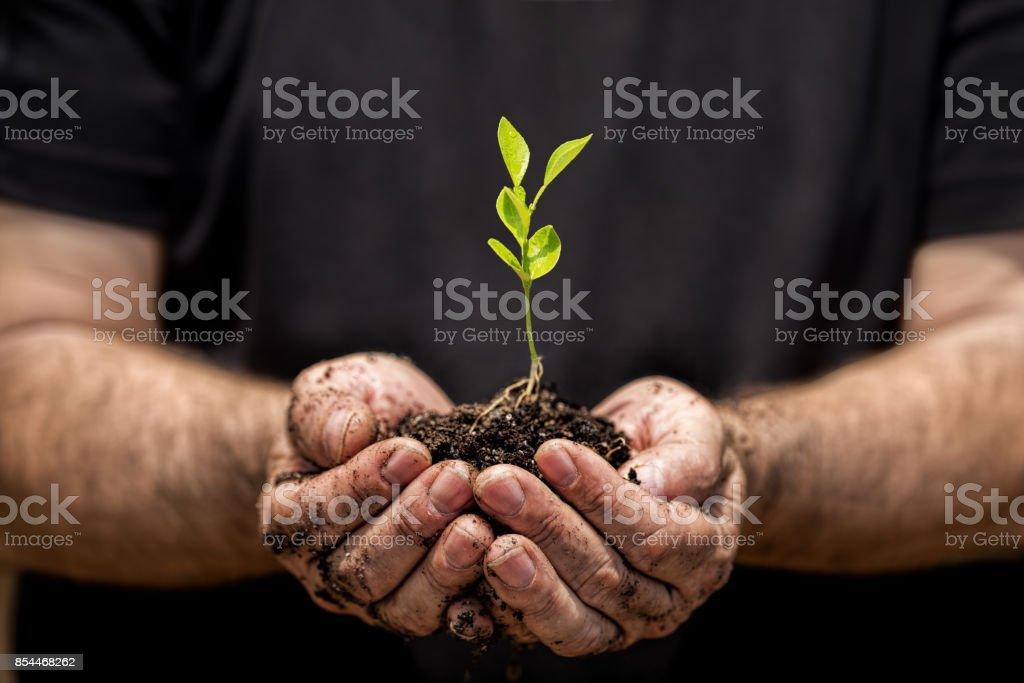 Joven planta en el suelo en una mano de un granjero. - foto de stock