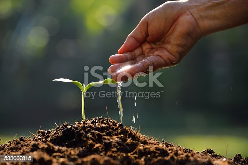 Farmer's hand watering a young plant