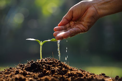 912882270 istock photo Young plant 533007815