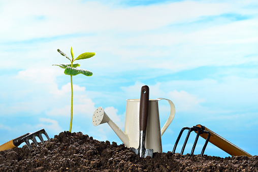 915680272 istock photo Young plant 579774750