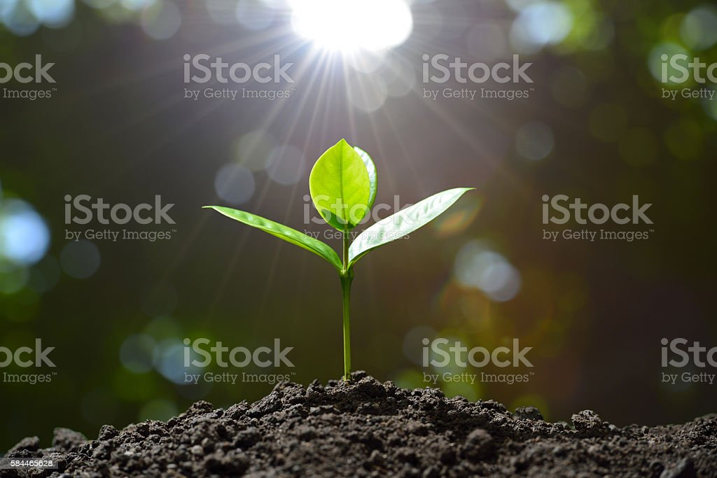 Young plant royalty-free stock photo