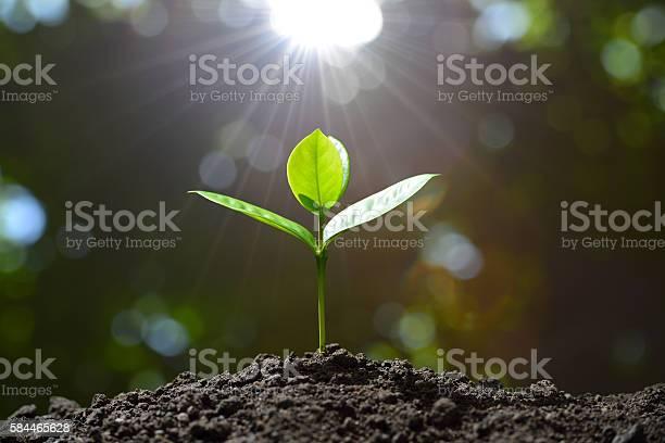 Young plant picture id584465628?b=1&k=6&m=584465628&s=612x612&h=ip0pjuzbubgtf6suiekjc0jfigfrccuhsyduzeqvll4=