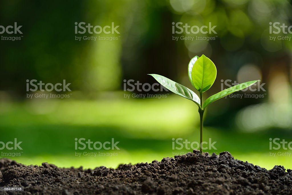 Young plant stock photo