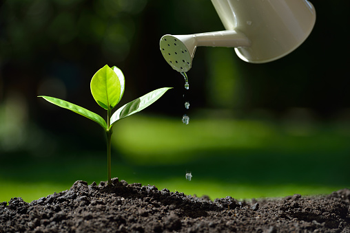 915680272 istock photo Young plant 584467478