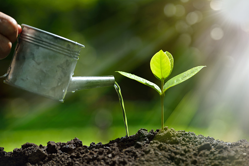 915680272 istock photo Young plant 585084148
