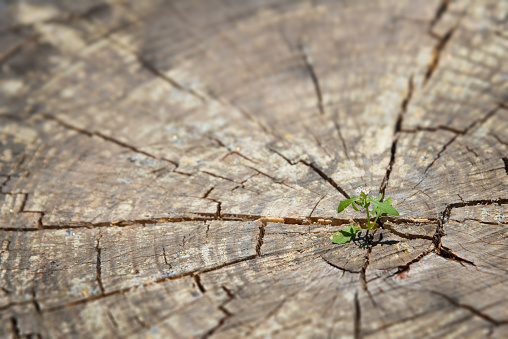 young plant sprout growing in old wood-  new life concept