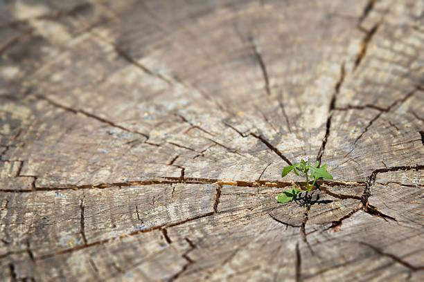 Pousse de plus en plus jeune plante dans le vieux wood- nouveau concept de vie - Photo