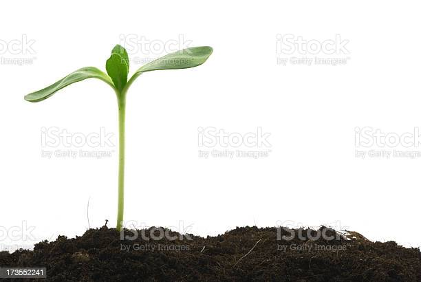 Photo of Young plant standing tall above the soil