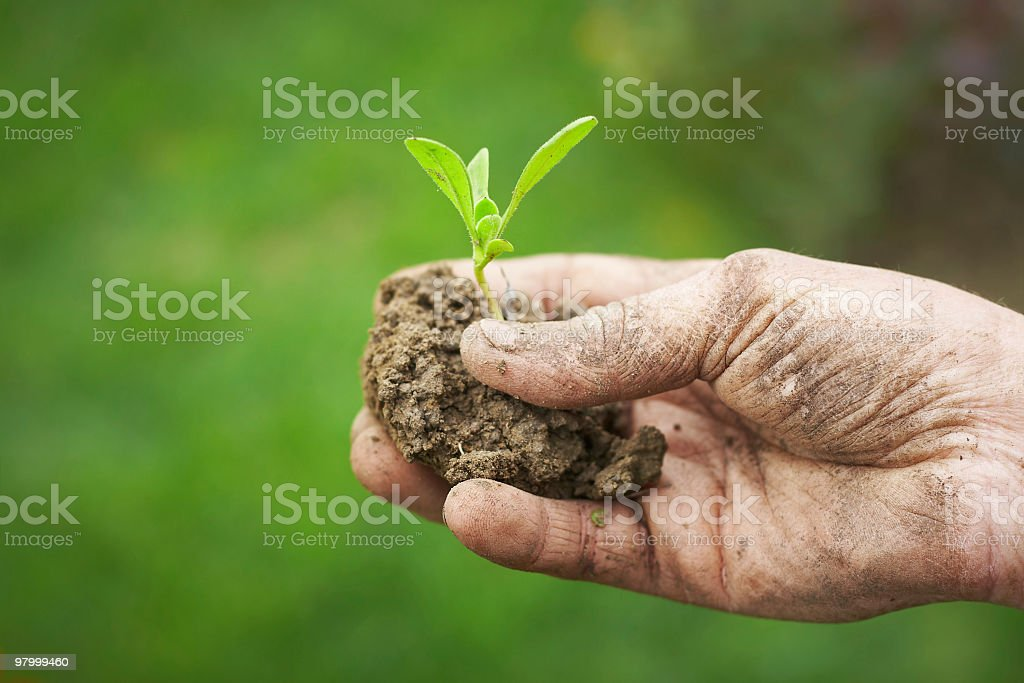 young plant, symbol of new life royalty-free stock photo