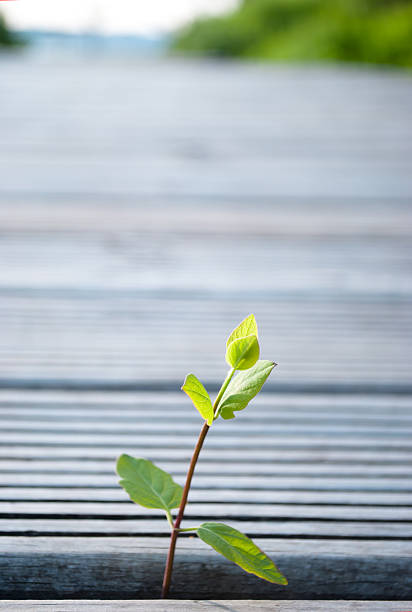 Young plant taking  roots in the adversity stock photo