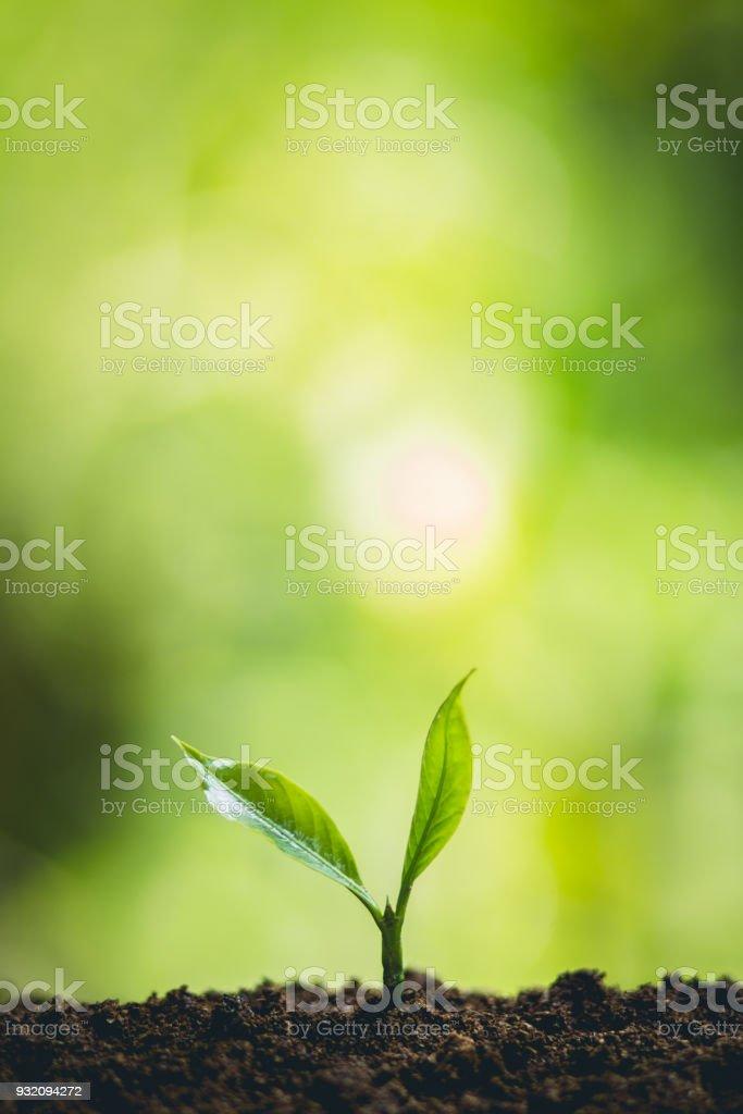 ํYoung Pflanze Baum in der Natur – Foto