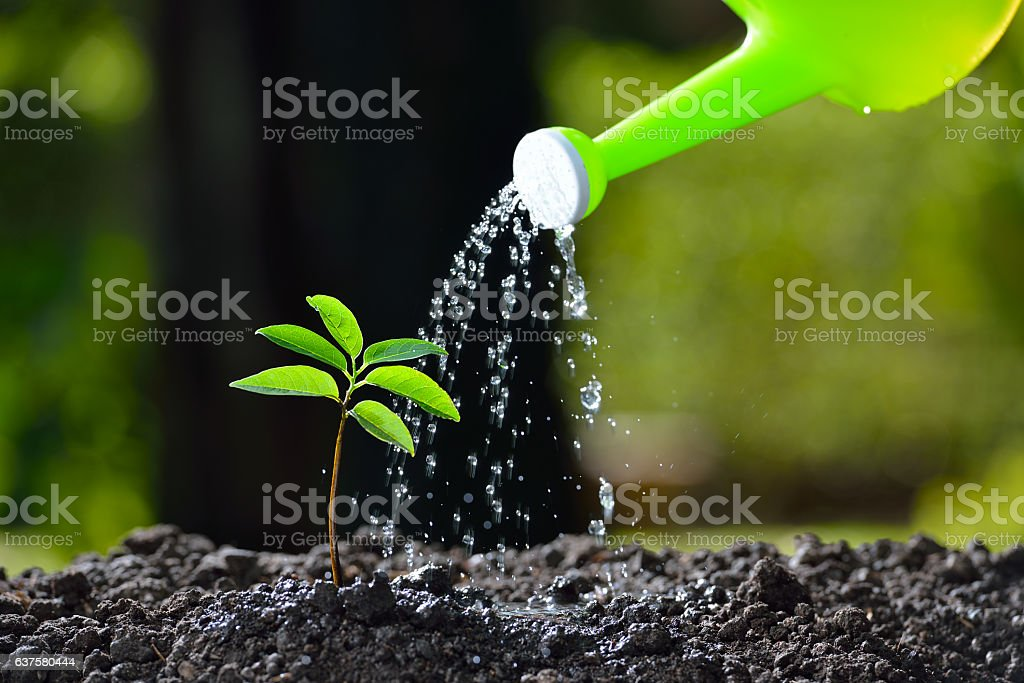 Young plant watered from a watering can stock photo