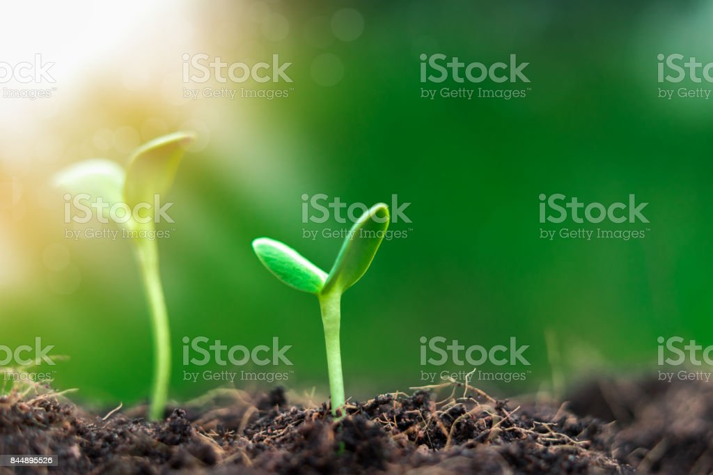 Young plants begin small growing in soil ecology earth new world from...