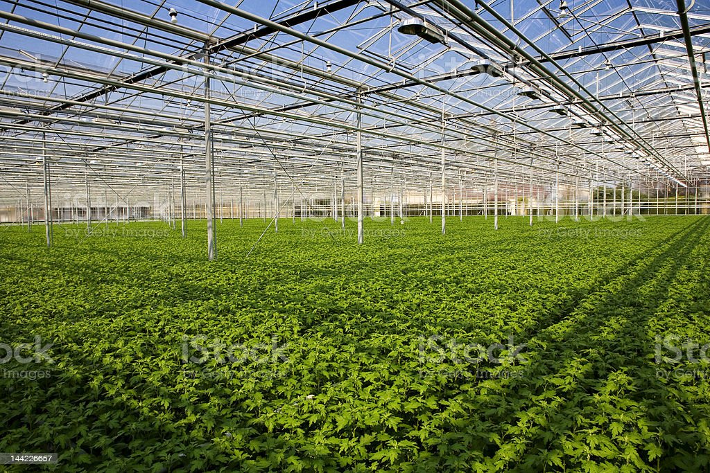 young plants in greenhouse royalty-free stock photo