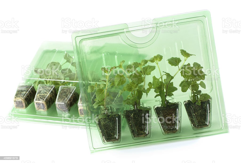 Young plants in packs for mail order stock photo