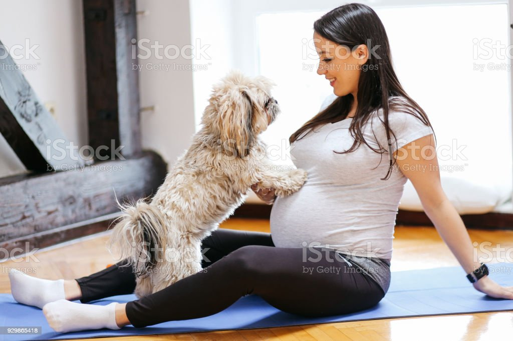 Young pregnant woman playing with her pet dog stock photo
