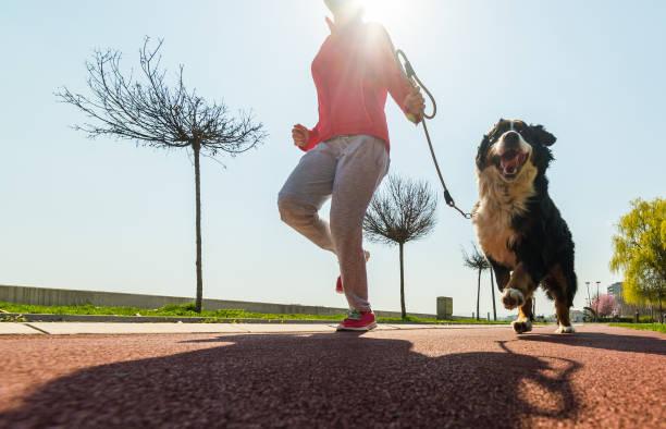Young pretty girl running outdoor in the spring with her bernese dog picture id658883866?b=1&k=6&m=658883866&s=612x612&w=0&h=oy36wychauvxuhdfvwnvg5j2zzdoycu2rjze7nke0bu=