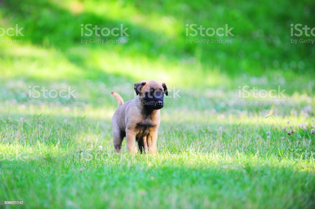 young puppies stock photo