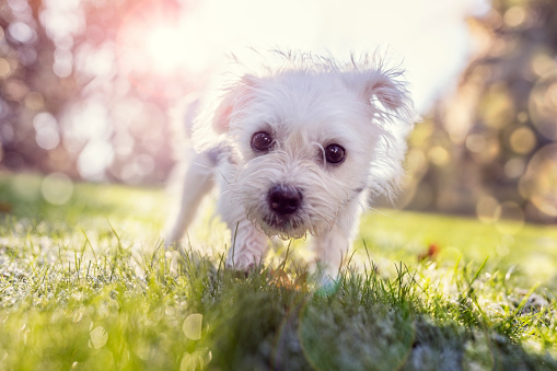Young Puppy Outside For A Walk In The Park Stock Photo - Download Image Now