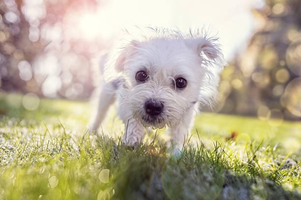 young puppy outside for a walk in the park - summer smell bildbanksfoton och bilder