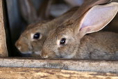 Young rabbit animal farm and breeding. Whole background.