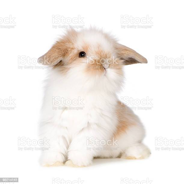 Young rabbit picture id93214141?b=1&k=6&m=93214141&s=612x612&h=dttam0txbmu7kmkrftoy2tbntlz0ulwcckkaa6amgc8=