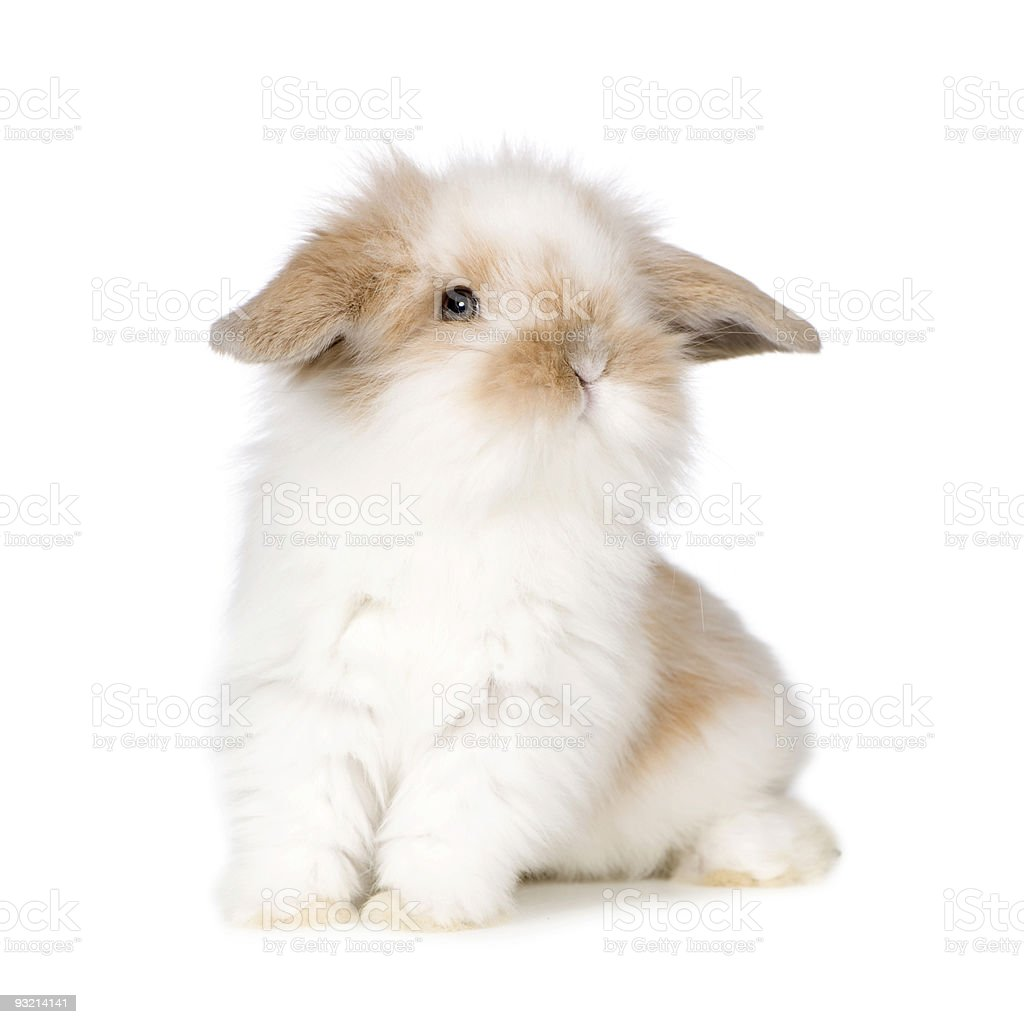 Young Rabbit stock photo