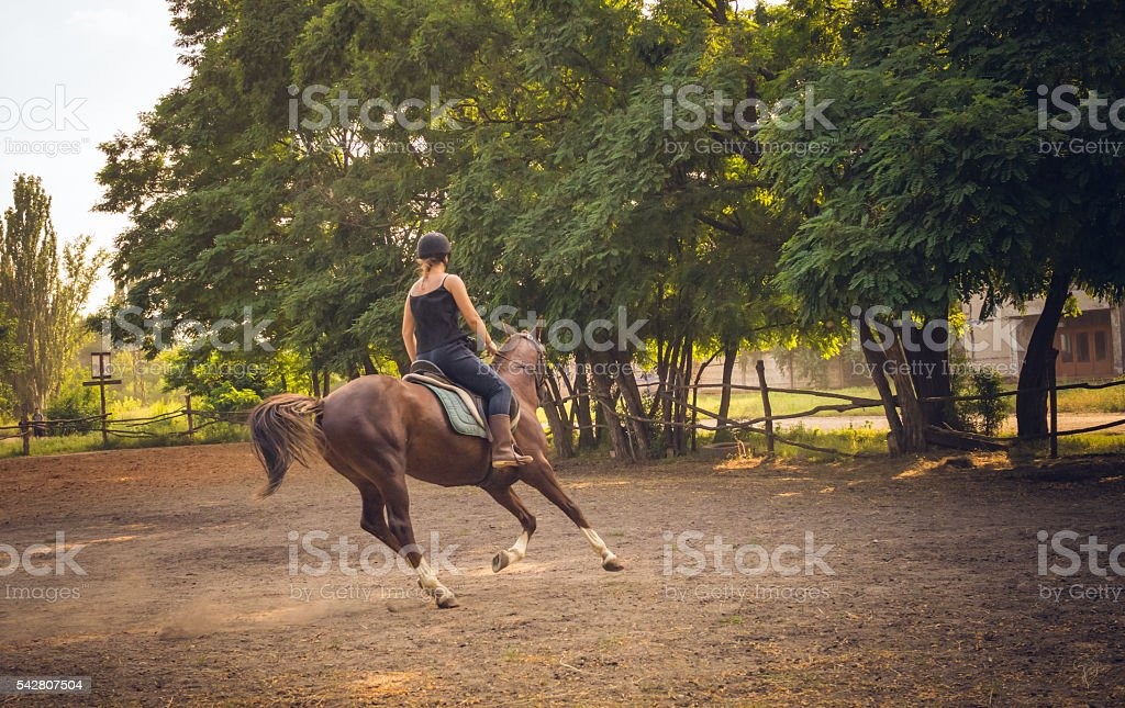 Young race horse in the arena for training stock photo