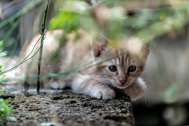 young red cat first experiences - angst vor der geburt stock-fotos und bilder
