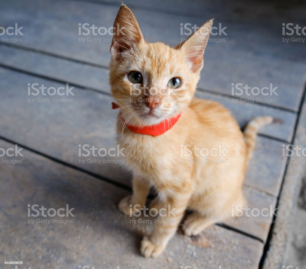 young red cat on wooden background looking up - orange kitty stock photo