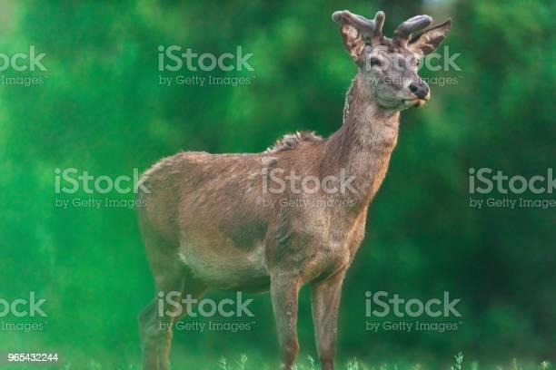 젊은 드디어 배경에서 흐리게 봄 나무와 벅 갈색에 대한 스톡 사진 및 기타 이미지