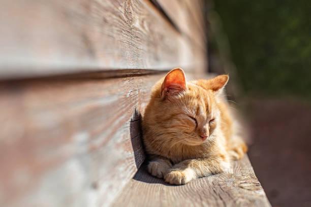 Young red kitten picture id945085432?b=1&k=6&m=945085432&s=612x612&w=0&h=iz7t3jpxwr wk5wdyneq7dsj2q m5dx1vlw09u81opk=