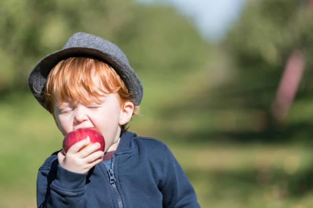 Junge rothaarige Baby Boy pflücken Äpfel im Obstgarten – Foto