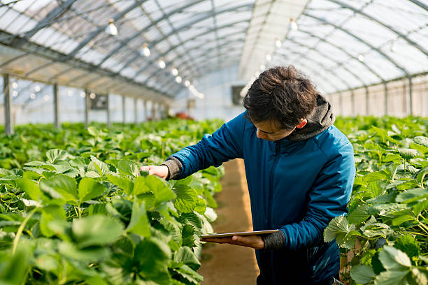 Young researcher with a tablet computer in a greenhouse stock photo