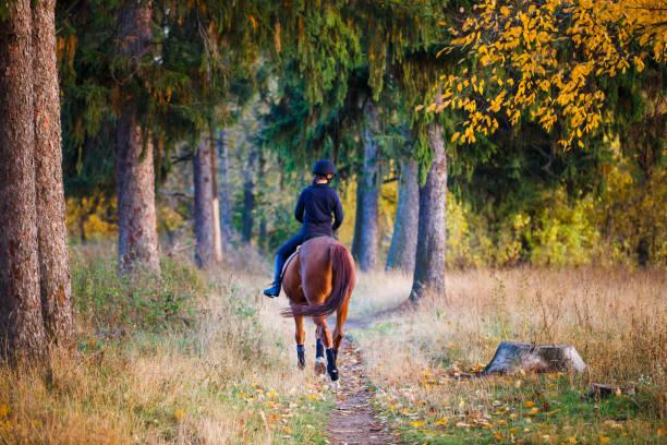 公園で馬騎乗の若いライダー - 乗馬 ストックフォトと画像