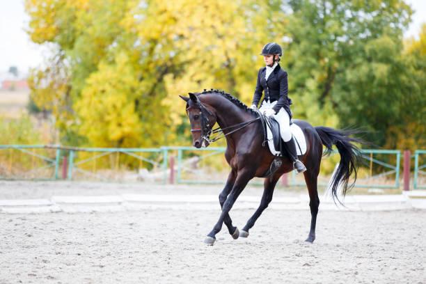 femme jeune cavalier à cheval sur la compétition de dressage - dressage photos et images de collection