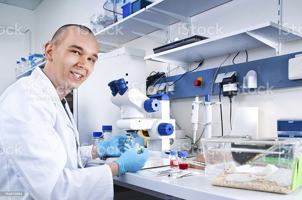 Young scientist works with laboratory mice stock photo