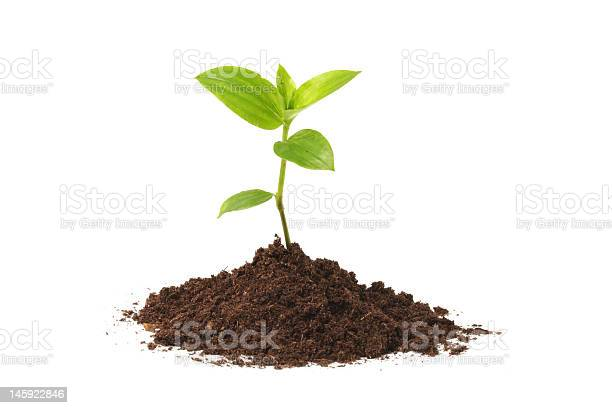 Photo of Young seedling growing out of soil over a white background