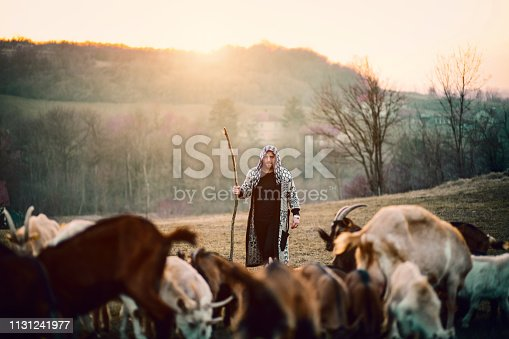 Smiling, Working, Animal, Fog, Hipster, Man , Sunset