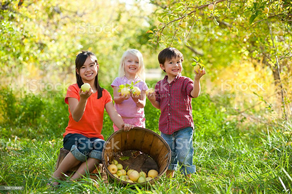 Young siblings and friend gethering apples together stock photo