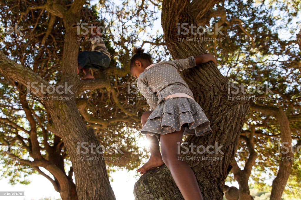Young siblings climbing a tree. stock photo