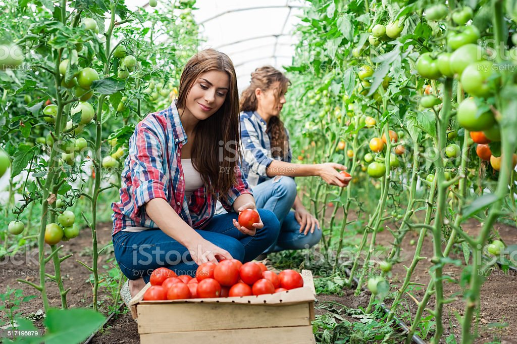 Young smiling agriculture women worker stock photo