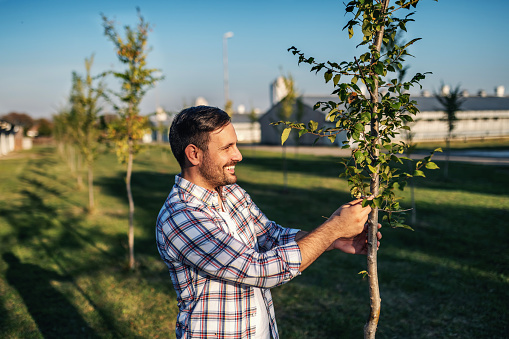 Young smiling happy agronomist standing in orchard and looking at fruit tree.