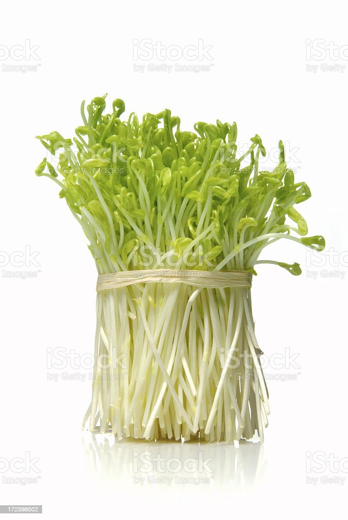 Young snow pea sprouts stock photo