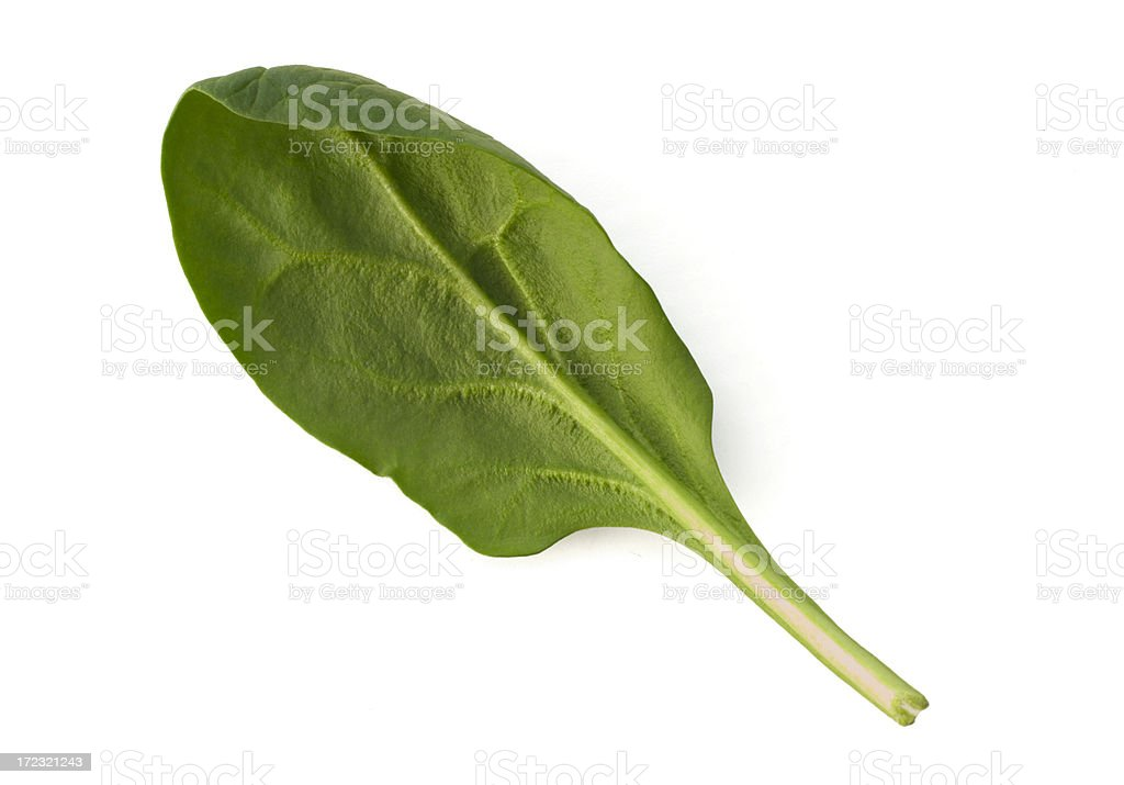 Young Spinach Leaf on White royalty-free stock photo