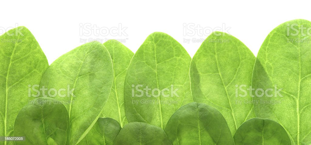 Young spinach leaves as border royalty-free stock photo