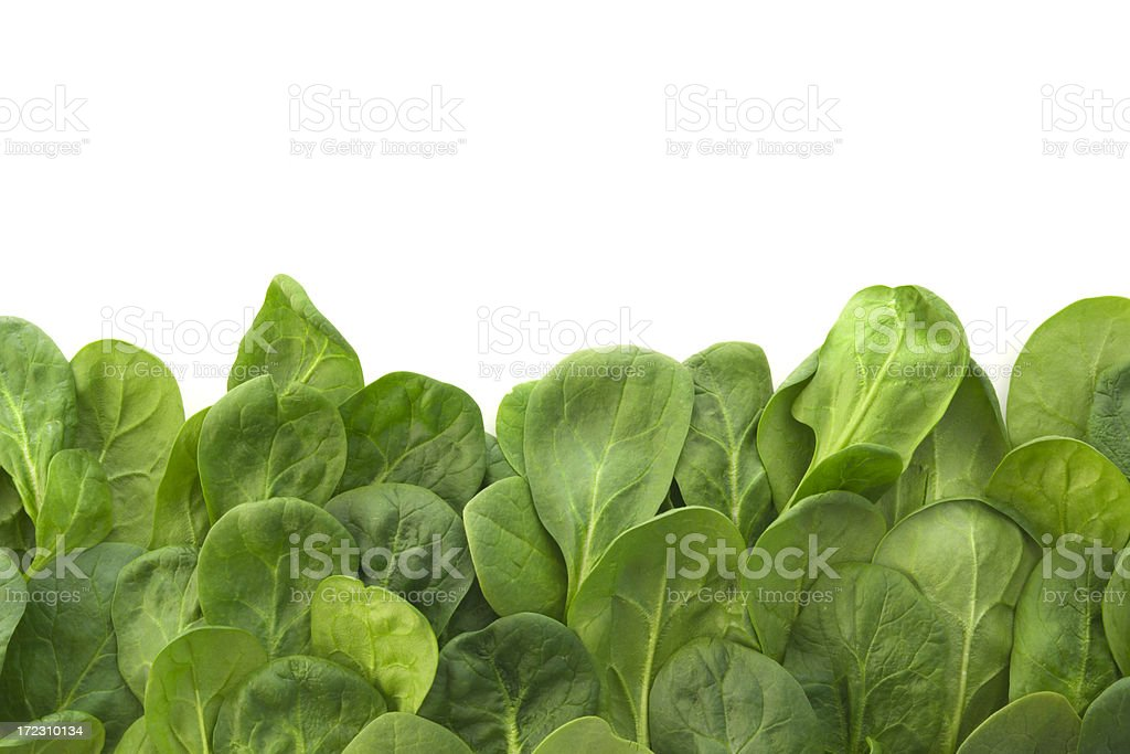 Young Spinach Leaves Border royalty-free stock photo