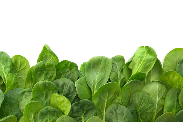 young spinach leaves border - spinach stock photos and pictures