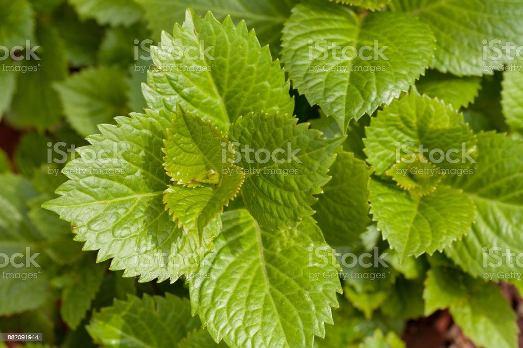 young spring leaves stock photo