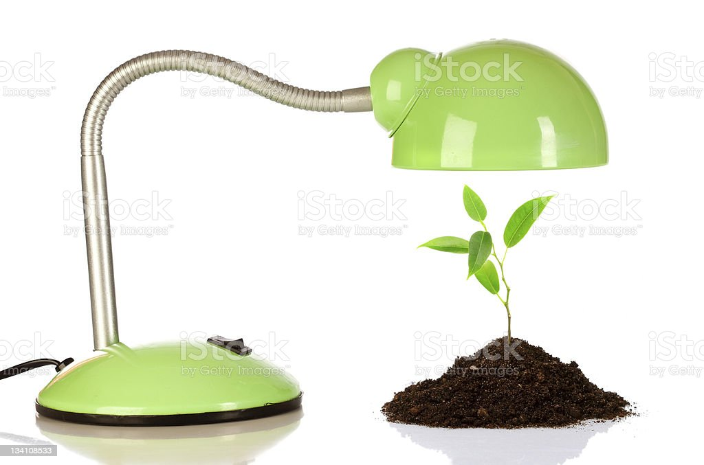 Young sprout and table lamp royalty-free stock photo